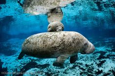 See manatees at  Crystal River during the winter (November through March) which is 70 miles north of Tampa