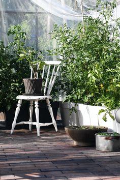 #brickfloor #greenhouse #tomatoes Greenhouse Tomatoes, Brick Flooring, Outdoors, Garden, Garten, Lawn And Garden, Gardens, Outdoor Rooms, Gardening