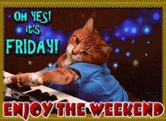 Happy Friday Gif, Friday Cat, Today Is Friday, Good Morning Friday, Its Friday Quotes, Good Morning Wishes, Happy Wednesday, Good Morning Quotes, Healing Wish