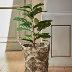 House Plants, Basket, Create, Winter, Beautiful, Instagram, Devil, Home Decor, House