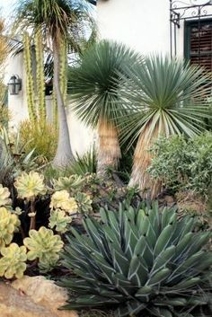 I love a South-western style garden full of succulents and cactus! by haoren