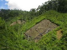People choose to live in these remote inaccessible areas because it gives them access to fresh forest to burn each year to generate a good harvest - the effects of this are starterlingly obvious as you look out across the valley and the forest is rapidly disappearing.