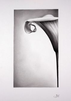 Hey, I found this really awesome Etsy listing at https://www.etsy.com/listing/62929809/still-life-flower-calla-lily-pencil