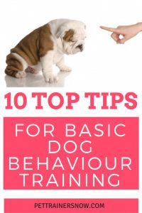 Teach your dog the absolute basics in dog behaviour like how to come when you call and other basic dog training tips.We feature ten basic dog training obiedience tips to help and inspire any newbie dog owner! All this and other dog training tips and ideas Puppy Obedience Training, Basic Dog Training, Puppy Training Tips, Dog Training Videos, Training Dogs, Training Plan, Training Schedule, Brain Training, Training Equipment