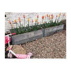 """300 gilla-markeringar, 8 kommentarer - Anna Lidström (@anotherblog.se) på Instagram: """"Ångrar inte att jag planterade lökar i höstas. #anotherbloghome"""""""
