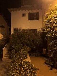 Christmas Tree, Holiday Decor, Home Decor, Porto, Teal Christmas Tree, Decoration Home, Room Decor, Xmas Trees, Christmas Trees