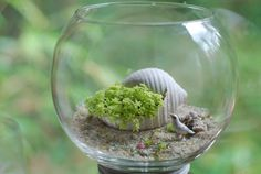 succulent in shell with bird terrarium by weegreenspot on Etsy, $35.00
