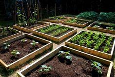 gemüse beet anlegen-in quadraten-aufteilen herbst                                                                                                                                                                                 Mehr