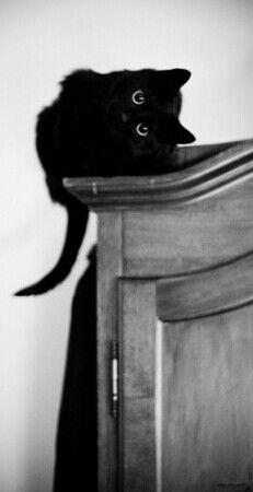 Black Cat♥ Baby Ari! But now she is a sleek looking black cheetah.