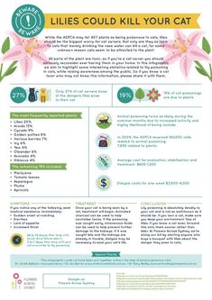 Cat Nutrition Facts Are Lilies Poisonous to Cats? Can Lilies Kill Your Cat? - Are lilies poisonous to cats? Lilies are not only fatal to your cat but they are so toxic merely sniffing the pollen or drinking the vase water is enough to cause renal failure. Toxic Plants For Cats, Cat Safe Plants, Cat Care Tips, Dog Care, Benadryl For Cats, Siberian Cats For Sale, Angora Cats, Warrior Cats Books, Herding Cats