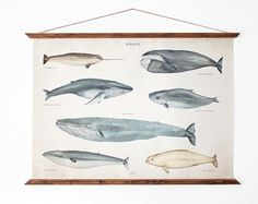 LARGE A1 Whales Canvas poster a1  vintage illustration by ARMINHO