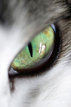 ✯ Beautiful Cat Eye :: Unknown Photograph ✯