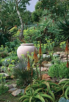 Succulent Garden Sukkulenter Garten - Bathtubs Modern Bathtubs The bathtubs that Succulent Landscaping, Succulent Gardening, Backyard Landscaping, Cacti Garden, Landscaping Borders, Backyard Designs, Container Gardening, Types Of Succulents, Cacti And Succulents