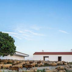 Au cœur de la région d'Evora en Espagne, dans un paysage rural resté naturel sur de nombreux hectares, une bergerie d'une centaine d'années a été transformée en un lieu de séjour pour le tourisme. Une quête de lumière et d'ouverture au paysage a...