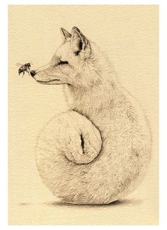 fox and bee - my favorite drawing to date