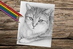 Tabby Cat Sitting coloring book page adult by ArtistrybyLisaMarie #AdultColoring #ColoringPage #GiftsForGirls