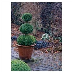 Need some topiaries in our yard