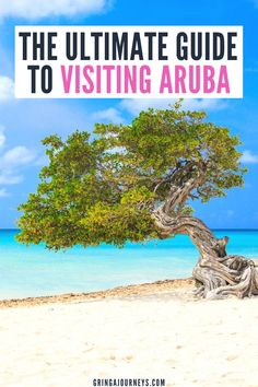 Here is the ultimate guide to visiting Aruba! Learn important tips before you travel to Aruba from a pro who has been before and learned the best way to experience One Happy Island! | free aruba travel guide | things to do in aruba | aruba travel blog | aruba travel advice | visiting aruba | aruba travel tips | best time to go to aruba | aruba blog travel | aruba review | aruba vacation tips | aruba things to know | things to know about aruba | when to go to aruba Travel Advice, Travel Guide, Aruba Aruba, Visit Aruba, Caribbean Vacations, Iceland Travel, Beautiful Islands, Things To Know, Vacation Trips