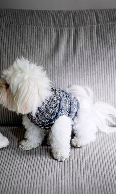 Koiran villapaita | Meillä kotona Throw Pillows, Knitting, Dogs, Animals, Cardigans, Toss Pillows, Animales, Tricot, Animaux