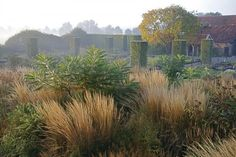 In Mr. Oudolf's own garden, in the Netherlands, he employs the use of both formal geometric shapes—the clipped Pyrus salicifolia 'Pendula' (silver pear) in the background—and apparently random, scattered grasses.