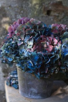 Blue hydrangeas in galvanized buckets would make a lovely table arrangement.