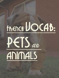 Talk in French French Vocab: PETS AND ANIMALS » Talk in French