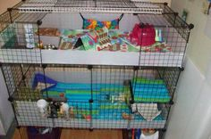 Two 2x4 cages with storage underneath.<br /> The bottom houses my 2 males and the top will soon house two females.