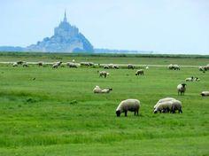 Normandie vue du ciel autour du Mont Saint Michel et les mouton des prés salés - GEO communauté photo