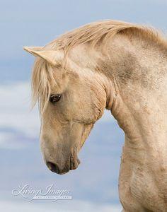 The Curve of Cloud - Fine Art Wild Horse Photograph - Wild Horse - Pryor Mountains - Cloud