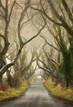 Таинственный лес, или Темная аллея в Ирландии - Путешествуем вместе