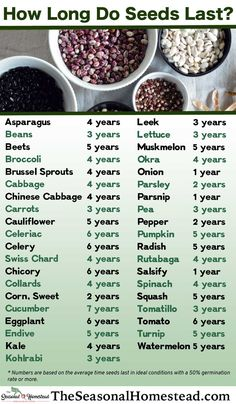 How Long Do Seeds Last? - The Seasonal Homestead Seed Storage, Seed Bank, Chinese Cabbage, Seed Packets, Plantar, Garden Seeds, Growing Vegetables, Growing Tomatoes, Saving Seeds From Vegetables