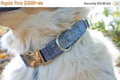SALE Dog Collar-Denim Dog Collar-Blue Dog Collar-Male Dog Collar-Boy Dog Collar-Custom Dog Collar-Fashion Dog Collar-Designer Dog Collar