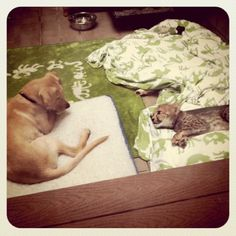 Cheetah Cub with his Puppy best friend at Busch Gardens Tampa Bay