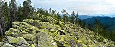 carpathians stone pine lichen moss outdoors hiking trravel journey sky moutains horizon panorama