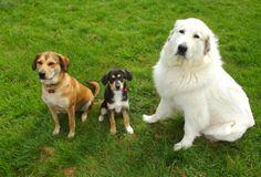 Bella, Chanel et Dgena