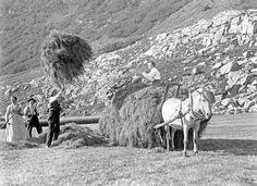 Paul Stang, Loading hay, ca1910.