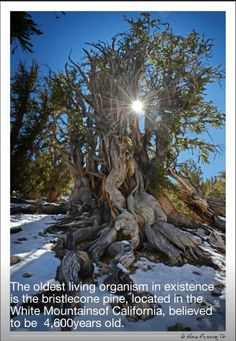 22 Best Oldest Living Things In The World Images Old Things World