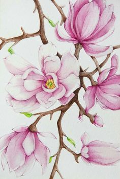 View Tanya Azarchik's Artwork on Saatchi Art. Find art for sale at great prices from artists including Paintings, Photography, Sculpture, and Prints by Top Emerging Artists like Tanya Azarchik. Pintura Magnolia, Magnolia Paint, Magnolia Flower, Watercolor Flowers, Watercolor Paintings, Original Paintings, Original Art, Painting Flowers, Painting Tips