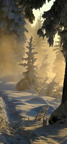 Winter Wonderland - Titled 'Lets go for a hike!'