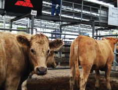 Agricultural Bulk Storage Sheds - Central Steel Build Shed Sizes, Aviation Training, Farm Shed, Horse Arena, Trust, Indoor Arena, Horseshoe Ideas, Horseshoe Crafts, Warehouse Design