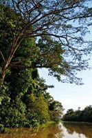 La selva riparia de las riberas del caño Tarapoto, permanece anegada la mayor parte del año.