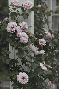 Captivating Why Rose Gardening Is So Addictive Ideas. Stupefying Why Rose Gardening Is So Addictive Ideas. Flowers Nature, Pink Flowers, Beautiful Flowers, Gerbera, Planting Succulents, Planting Flowers, Pink Garden, Flower Seeds, Raised Garden Beds