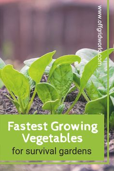 In times of scarcity, we can't always rely on the food industry to provide us with enough to eat. Growing a garden is a great way to ensure you and your family have plenty to eat, no matter what. Here are the fastest growing vegetables to get you started. #gardening #growingfood #vegetables #vegetablegarden #survivalgarden #growfood #fastgrowingvegetables Fast Growing Vegetables, Healthy Gluten Free Recipes, Food Industry, Sustainable Living, Vegetable Garden, Cruelty Free, Homesteading, Sustainability, Prepping