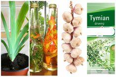 Silné antibiotiká z prírody, ktoré sa oplatí poznať aj v dnešnej dobe! Voss Bottle, Water Bottle, Ale, Healthy, How To Make, Food, Medicine, Beer, Ale Beer