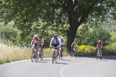 Ride in the Chianti