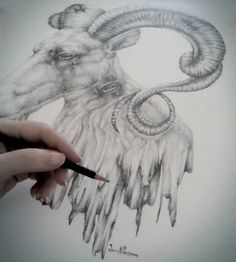 Goat with ornate horns drawing