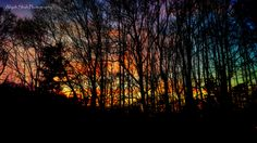 Forest at Sunset photography