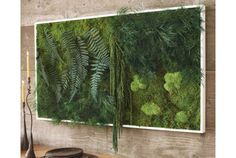 Vertical Gardens Fern and Moss Wall Art - VivaTerra More - You can tend edibles, annuals, and even perennials with these vertical gardening ideas.