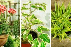 O soluție eficientă împotriva tuturor bolilor castraveților - Fasingur Garden, Plant, Garten, Gardening, Outdoor, Gardens, Yard, Tuin