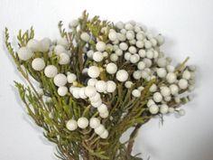 Bunia berries